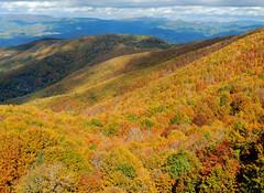 Dalla cima del Pratomagno (anto_gal) Tags: alberi firenze toscana autunno montagna bosco casentino arezzo pratomagno valdarno 2015 lorociuffenna