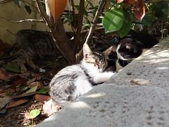 asleep (Lalallallala) Tags: travel italy cat italia syracuse siracusa archeologicalpark matka