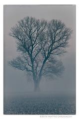 Albero (Teone!) Tags: venice italy tree fog italia mood nebbia albero venezia atmosfera veneto portogruaro brussa sindacale vallevecchia