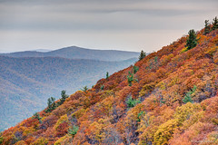 Blue Ridge Mountains - SNP, VA (Nikographer [Jon]) Tags: fall virginia nationalpark nikon october oct foliage va np shenandoahnationalpark 2015 snp nikographer d810 20151024d810022835