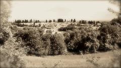 Bologna Hills.. old style (Sentieri) Tags: italy bike sepia landscape blackwhite country bologna paesaggio biancoenero emiliaromagna viraggio seppia