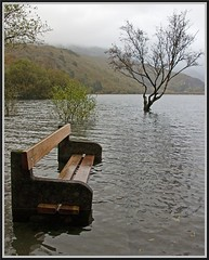 Higher tide and wet bottom -almost! (peterdouglas1) Tags: trees llanberis snowdonia northwales padarn llynpadarn thattree