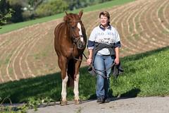DSC08299_s (AndiP66) Tags: horse mark sony sp ii di if af alpha tamron pferde 77 pferd equestrian f28 ld 70200mm tamron70200 andreaspeters tamronspaf70200mmf28dildif 77m2 a77ii ilca77m2 77ii slta77ii