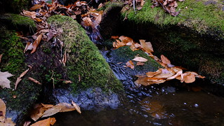 Ricker Mountain 11/6 - Running Water