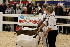 RAWF15 JSteadman 0103 (RoyalPhotographyTeam) Tags: sun royal goat 2015 rawf nov08