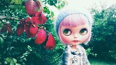 Autumn Tidings
