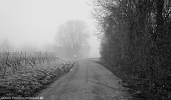 The Man that came out of the Fog. (andreasheinrich) Tags: november blackandwhite cold fog germany deutschland person moody nebel path kalt weg badenwürttemberg blackandwhitephotos düster neckarsulm schwarzweis nikond7000