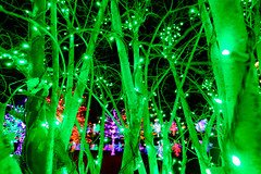 The money tree (pixl8) Tags: christmaslights vitruvianlights