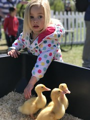 A Little Distracted (pn_taylor) Tags: floriade canberra 2016 family flowers spring iphone7