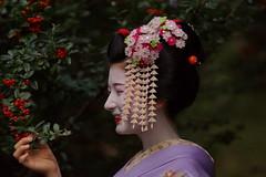 Maiko20161017_02_02 (kyoto flower) Tags: tanan fukuno kyoto maiko 20161017     yoshie