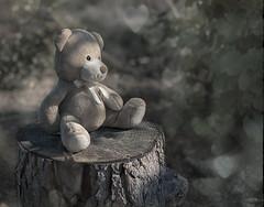 My son's Teddy Bear 25/31 (z_a_r_a) Tags: teddy bear toy bokeh hearts cute light dreamy sigma 50mm f14 nikon d750