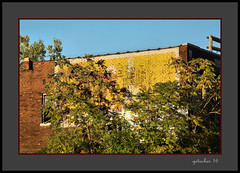 Ghost Sign in the Trees (the Gallopping Geezer 3.8 million + views....) Tags: sign signage faded worn wall paint painted old historic ad advertise advertisement product service ghost ghostsign building structure detroit mi michigan canon 5d3 24105 sigma geezer 2016