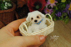 goober05 (Zhanna Zolotina) Tags: miniature dog ooak handmade toyzz tinydolhousetoyzz altair teddy bear dollhouse puppenhaus blythe