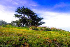 Scenery (Shree's~Passion~Photography) Tags: wow vacation trip green blue sky beauty mother nature peace bright light trees flowers beautiful california usa