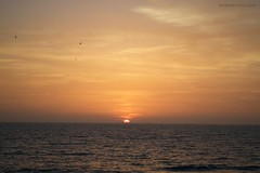 Puesta de sol (www.anhelarium.com) Tags: summer cdiz elpuertodesantamara verano sunset atardecer mar sea sun sol sky blue orange horizont horizonte andaluca espaa spain birds gaviotas seaguls light luz