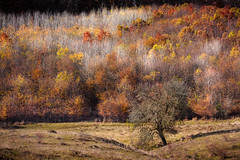 IMG_1033-Edit (Kozics Tibi) Tags: fall autumn colors landscape foliage forest eos40d 70200f4lusm