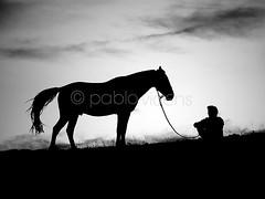 (Gallo Quirico) Tags: arcones caballo siluetas contraluz byn olympus e5 zuiko 50200mm backlight horse