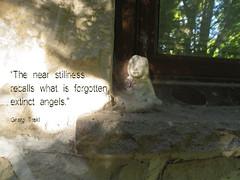 An extinct angel (homage to Georg Trakl) (Nelley) Tags: georgtrakl poet words brokenangel spider autumn text shadow shadows shade