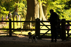 Time-out (h_cowell) Tags: silhouette silhouettes autumn warm warmth colour colourful fence gate people person dog wood woodland walk tree trees zoom blur panasonic gx7 leaves leaf foliage candid nationaltrust appicoftheweek alderley edge