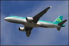 "AIRBUS A320 214 ""Aer Lingus"" EI-DVJ 3169 Frankfurt aout 2016 (paulschaller67) Tags: airbus a320 214 aerlingus eidvj 3169 frankfurt aout 2016"