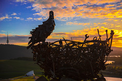Nest III (Theresa Hall (teniche)) Tags: arboretum australia canberra canberraaustralia eaglesnest teniche theresahall forests landscape morning sunrise trees view nest iii nestiii magpie sculpture metalsculpture metal scrapmetal scrap telstratower margaretwhitlampavilion scenery forest