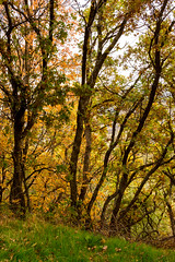 Autumnal Glow (O.S. Fisher) Tags: 5d canon canon5dmarkiii holmes holmesreservoir markiii osfisher october olivershaunfisher photo utah autumn color colorful fall flora foilage landscape layton leaves nature photograph photography scruboak season shaunfisher trees