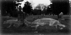 The hunt (Muzik Hounds) Tags: photoshop photoshopped borzoi wolfhound wolf cemetary grave graveyard gazehound ghost ghostly night tombstone hunting black white halloween spooky creepy