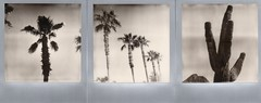sonoran desert triptych (EllenJo) Tags: roidweek polaroidweek 2016 sx70 impossibleproject theimpossibleproject arizona az ellenjo ellenjoroberts polaroid instantfilm october19