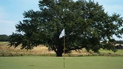No. 10's Live Oak (cnewtoncom) Tags: mossy oak golf club mississippi gil hanse architecture gilhanse golfarchitecture mossyoakgolfclub