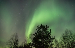Northern Lights (benbohm) Tags: night light aurora northernlights norway north arctic astrology fall landscape nature dark late nationalpark beautiful cold clear relax finnmark forest green lights watch