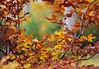 Herbstlaub (TheGrainyPicture) Tags: herbst herbstlaub gold braun bokeh blur gelb grün nokton voigtlaender wald buche buchenlaub autumn natur nikon d800 58mm slii ngc