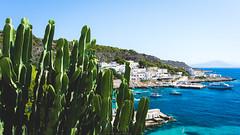 Cactus (Nicola Pezzoli) Tags: levanzo sicilia sicily island egadi summer sea water colors nature canon tourism cactus harbor blue