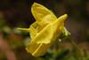 20160924_Cinq_Sens_Yvoire (5 sur 13) (calace74) Tags: rhonealpes hautesavoie nature fleurs macro jardinsdes5sens yvoire
