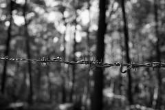 Forest wire (Martijn A) Tags: barbed wire prikkeldraad forest bos drunense duinen creative creatief bw zw blackandwhite zwartwit canon d550 dslr 35mm lens monochrome noiretblanc nl the netherlands wwwgevoeligeplatennl
