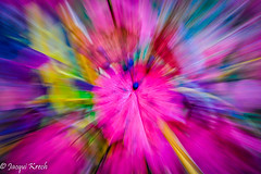 The Berry in the Middle (Jacqui1224) Tags: pfabstract16 colour zoomburst natureabstract abstracts pfccabstract16