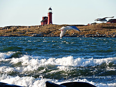 Riding the Wind - Seagulls at Tyl (Amberinsea Photography) Tags: sea gulls seabirds seagulls island tyl tylsand lighthouse nature water waves amberinseaphotography halmstad sweden