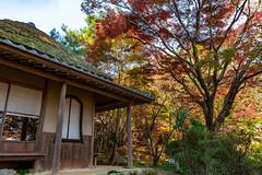 Old Teahouse   Jigen Temple  (Hiro_A) Tags: teahouse tearoom old architecture autumn leaves jigen temple niihama ehime shikoku japan nikon d7200 sigma 1770mm 1770 traditional fall maple