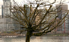 Tree (borden_martin) Tags: coalharbour vancouver fall