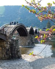 Kintaikyo XII (Douguerreotype) Tags: japan iwakuni kintaikyo bridge people wood historic architecture cherry blossom cherryblossom sakura bokeh river water pink