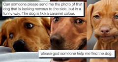 One Man's Search for a Dog Meme Really Brought the Internet Together (Chikkenburger) Tags: memebase memes art trolling pranks tricks lies aot internet troll cheezburger chikkenburger