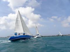 255-DSCN9886 (eric15) Tags: sea beach water race cat for boat eva surf sailing wind offshore sailors luna aruba international dash sail regatta sailor optimist sunfish oranjestad surfside