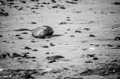 Seascape: Small details (III) (Gonzalo Castn) Tags: sea blackandwhite espaa seascape blancoynegro beach mar spain playa almera cabodegata smalldetails paisajemarino pequeosdetalles njar nikond5100 nikkor552004fdx