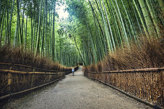 Bamboo forest (CARLORICCI) Tags: trees sun green japan backlight nikon kyoto jr arashiyama carlo sole 16mm giappone controluce bambooforest japanrailpass kyotoprefecture nikond810 ©copyright carloricci forestadibambù riccarlo carl㋡ oןɹɐɔcarlo nikkor1635mmf4vrgedafs arashiyamagenrokuzancho