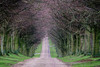 Bewitched trees (bevtreadaway) Tags: awesometrees