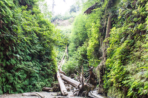 "Fern Canyon III • <a style=""font-size:0.8em;"" href=""http://www.flickr.com/photos/66187673@N07/21700454758/"" target=""_blank"">View on Flickr</a>"