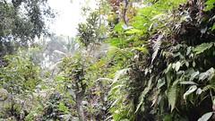 DSC_1336 (sootix) Tags: bali green temple ancient streams lush gunung pura kawi