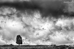 albero (Boscolo Marco Camiletto) Tags: bw panorama mountain tree nature fog natura bn nebbia albero montagna arancio arancione stich biscia