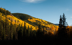 Gradient of Season (Patrick.Russell) Tags: autumn trees fall nature silhouette yellow landscape outside outdoors gold nikon colorado outdoor co aspens wilderness crestedbutte d300 lightstoke