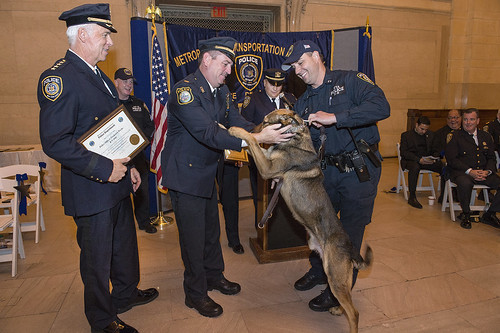 Class of 2015 MTA PD Canine Graduates by MTAPhotos, on Flickr
