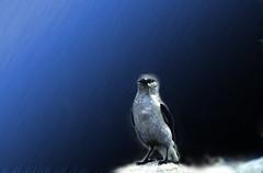 White raven in rain (Film) (tsuping.liu) Tags: outdoor organicpatttern birds rain nature natureselegantshots naturesfinest darkbackground ecology photoborder perspective pattern photographt